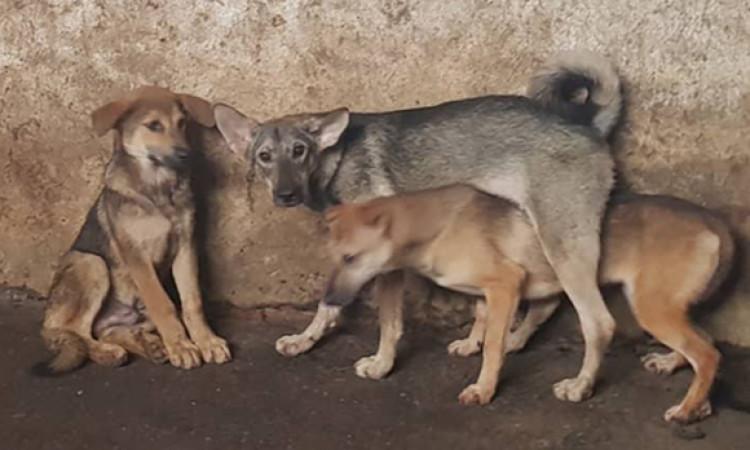 Hà Nội dự kiến cấm bán thịt chó ở các quận nội thành từ 2021