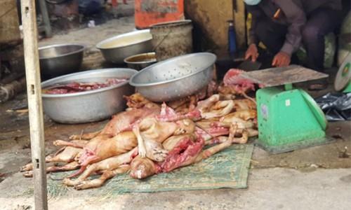 Tổ chức Four Paws cảnh báo xu hướng mới đối với thịt chó và mèo trong bối cảnh đại dịch toàn cầu