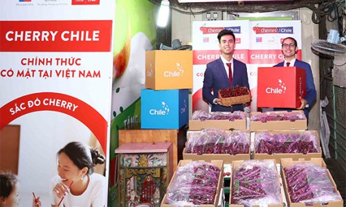 Cherry Chile chính thức có mặt tại Việt Nam