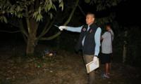 Nông dân Thái Lan bị bắt vì bắn chết kẻ trộm sầu riêng